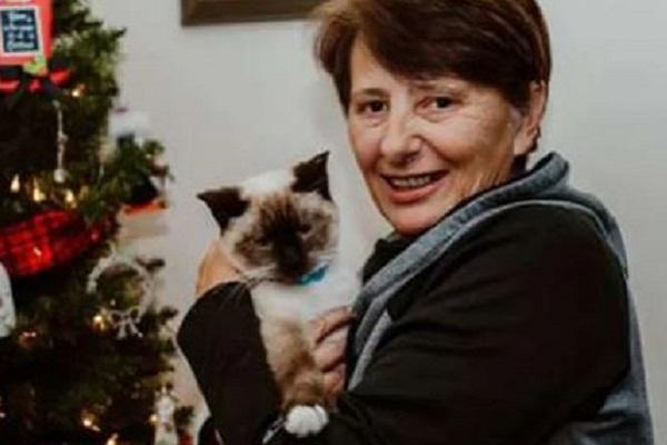nuova adozione per gattina abbandonata