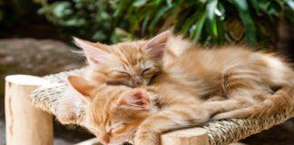 gattini dormono
