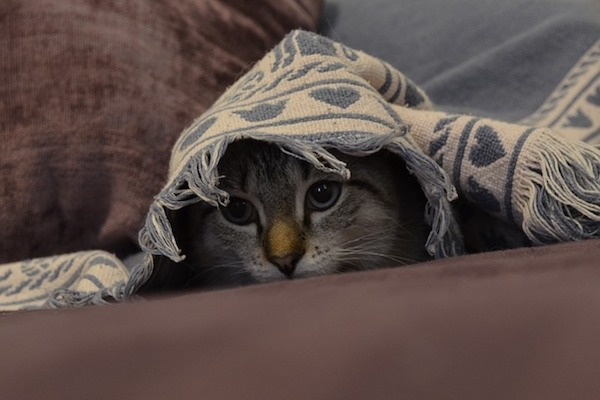 gattino impaurito