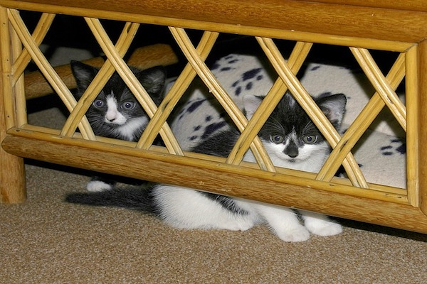 gattini nascosti