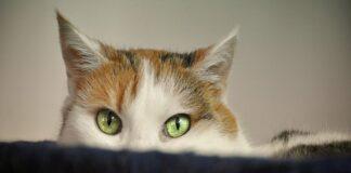 gatto impaurito