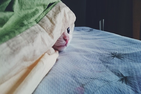 gattino nascosto nel letto