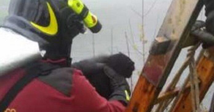 gattino intrappolato nel Naviglio salvato dai vigili del fuoco