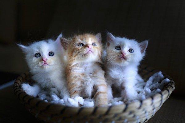 gattini insieme