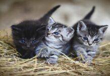gattini maschio o femmina