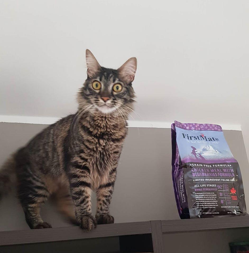 gatto-Gimmy-cibo-crocchette