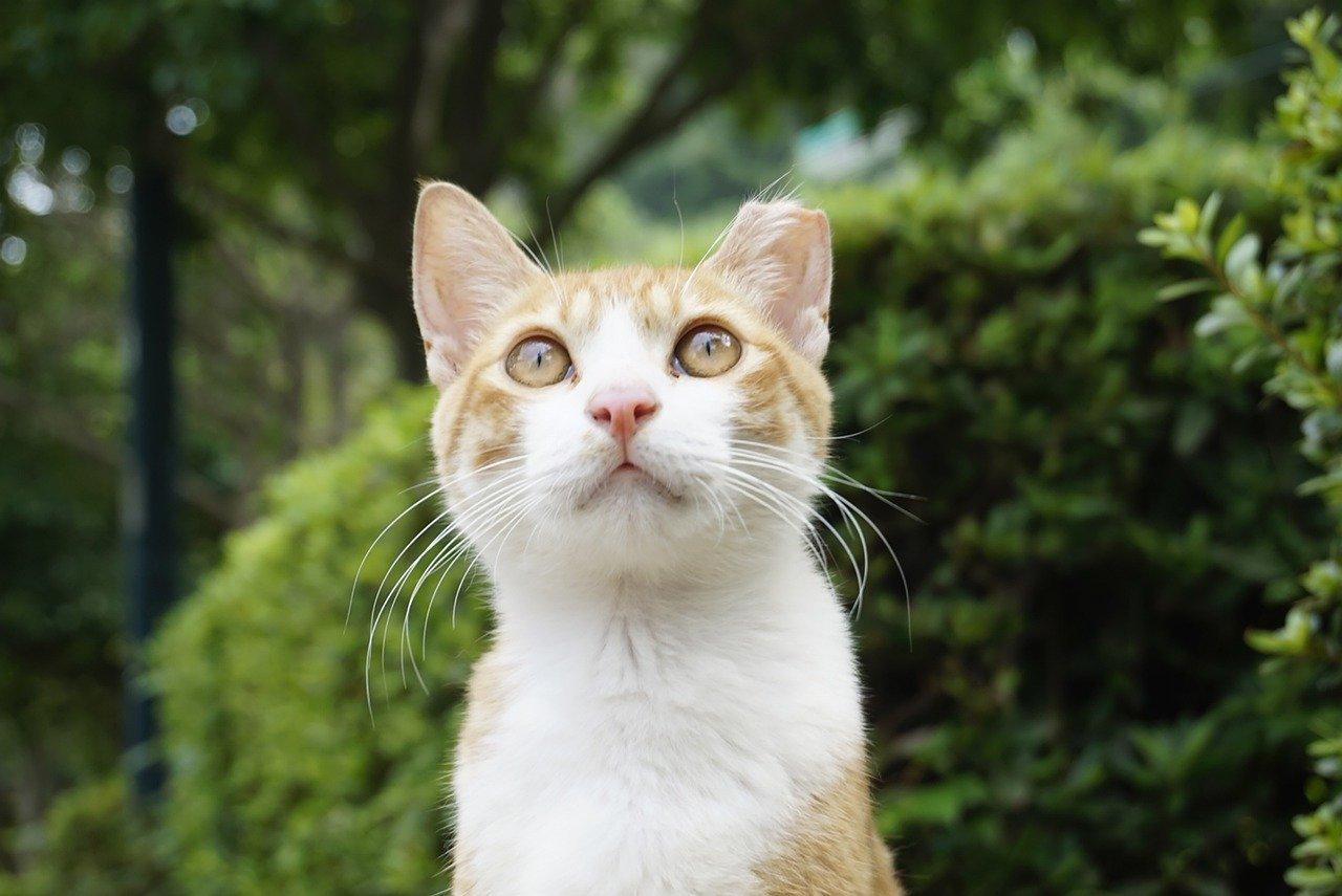 gatto-formaggio