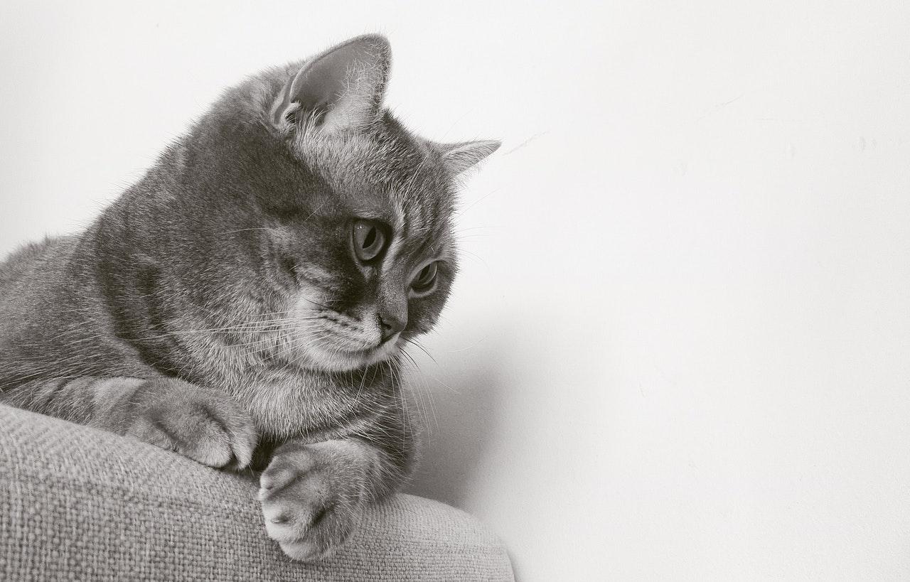 gatto-grigio-idee-nomi