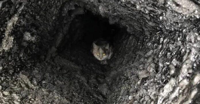 gatto intrappolato in canna fumaria