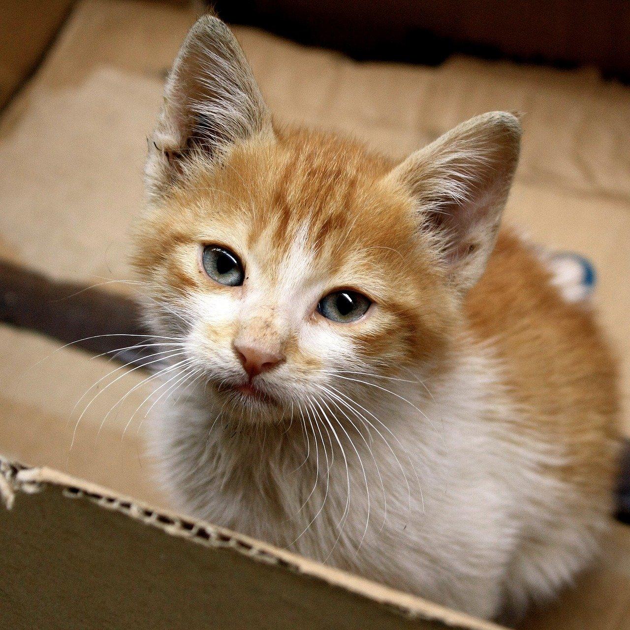 gatto-nella-scatola