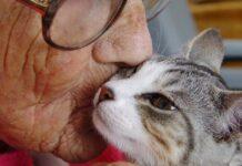 gatto con donna anziana