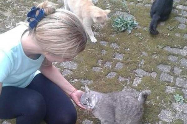 colonia di gatti a ferno