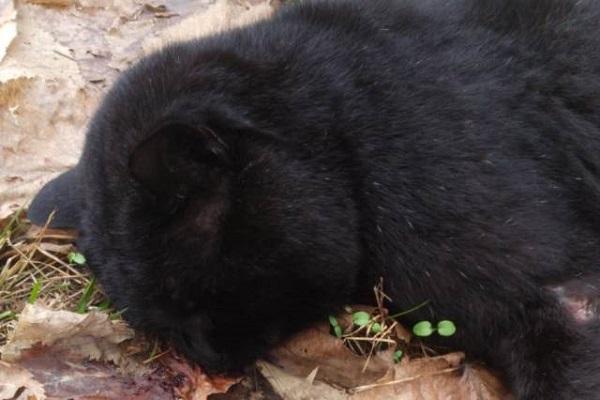gatto ucciso con un colpo di spranga