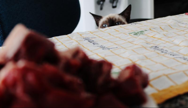 Gatto e carne