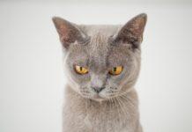 nomi-gatti-grigi