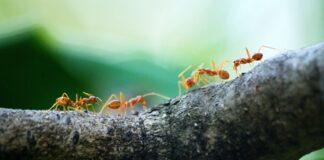 perchè-gatti-piacciono-formiche