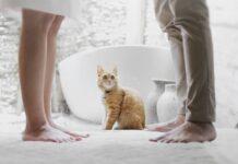Gatto e piedi