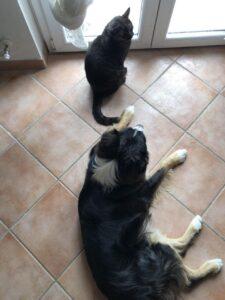 Un gatto per amico: come farli stare bene in casa e rendergli la vita serena e tranquilla