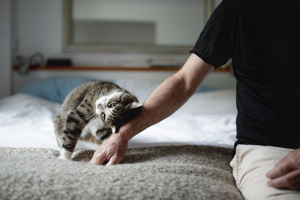 coccole al gatto
