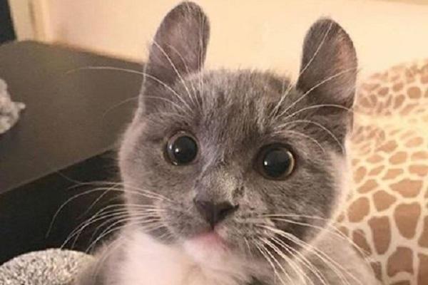 kinkalow gatto