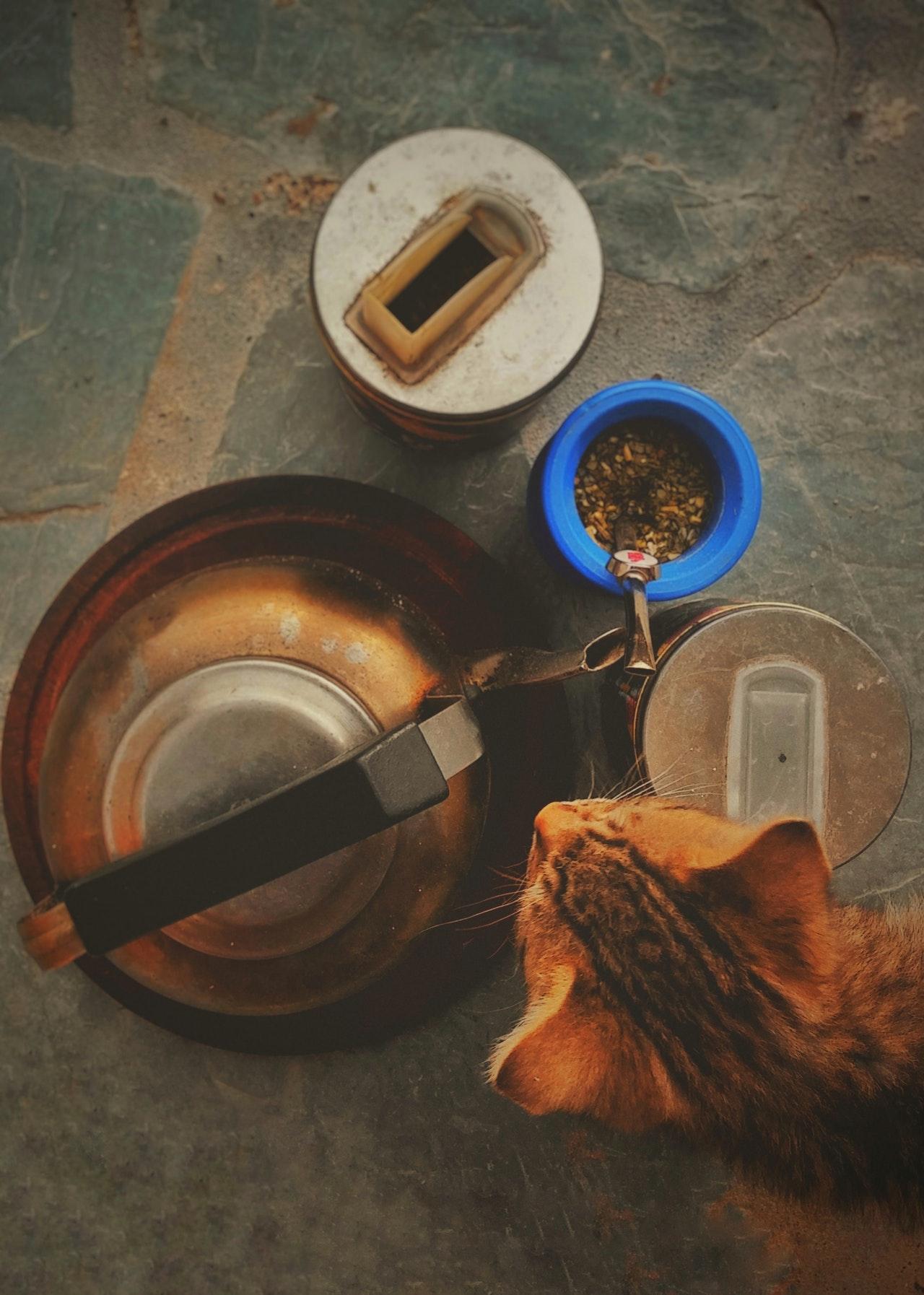 ricette-gatti
