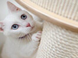 gattino e tiragraffi