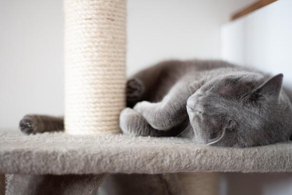 gattino rilassato
