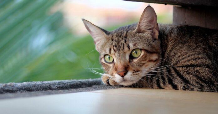gatto accucciato
