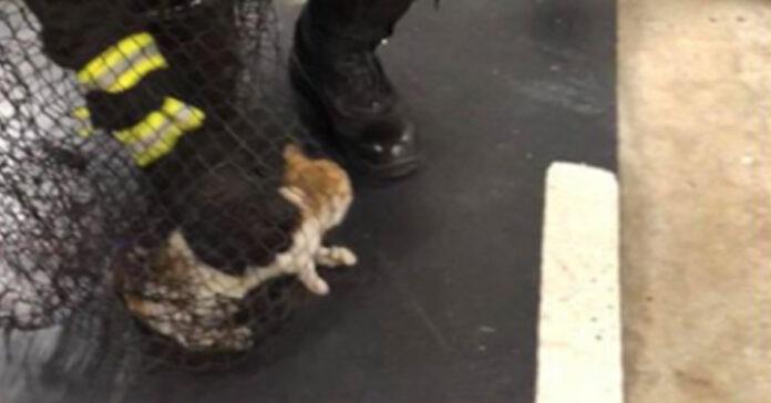 Gattino salvato dai Pompieri