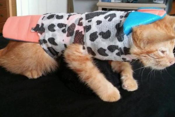 Gatto ferito