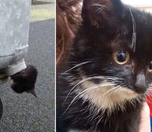 Gattino incastrato