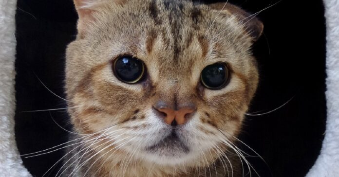 foto calendario per gattile