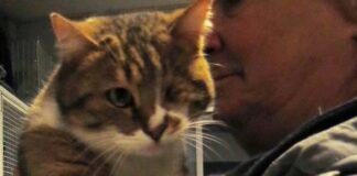 Gattino senza un occhio