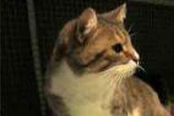 Gattino di profilo