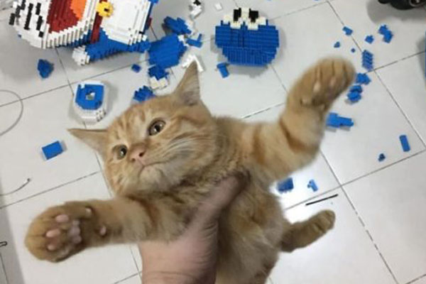 Gatto che ha distrutto un Doraemon