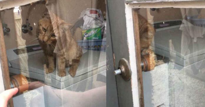 Gatto dietro ad una finestra