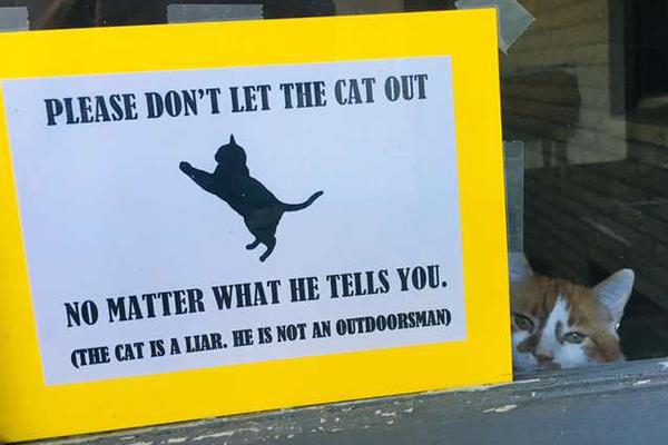 Cartello per gatto