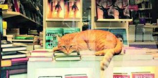 Gatto in una libreria