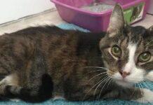 thomas, gatto di 26 anni