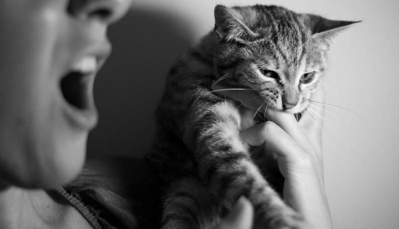 Gatto e morso