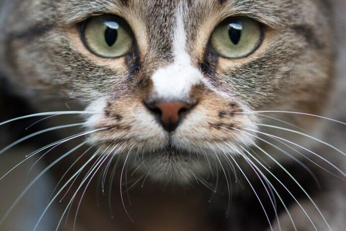 alimentazione-naturale-gatto