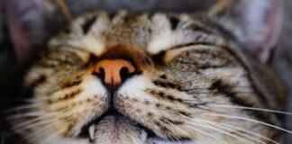 Gatto e sonno