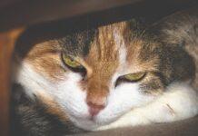 Gatto sotto al letto