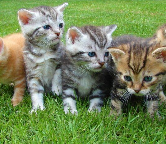 comportamento-gatti