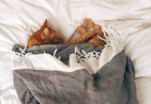 comportamento-gatto-dopo-sedazione