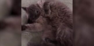 gatta uccisa per errore con farmaco per eutanasia