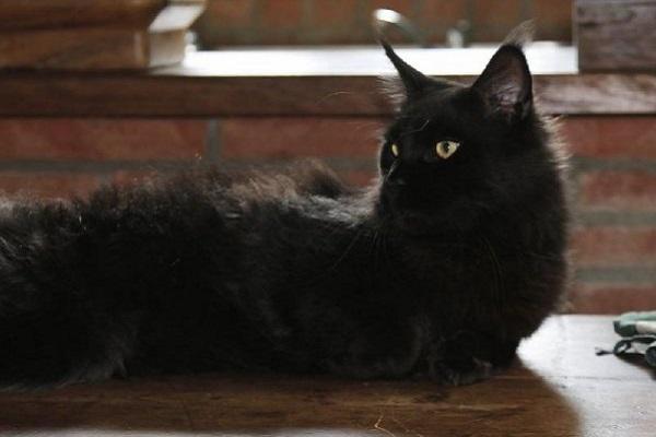 gatta sente esalazioni stufa e salva la famiglia