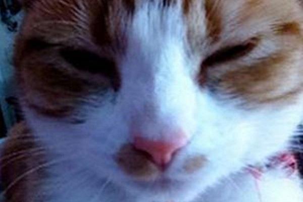 nala, gatta bianca e rossa