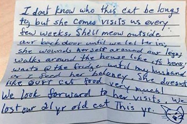 la storia di una gatta in una lettera