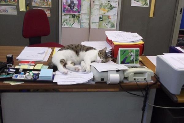 gatta sindaco che dorme